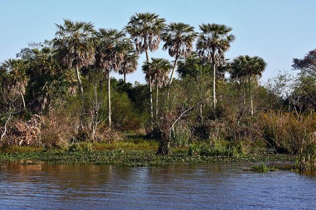 Esteros del Ibera Paquete Terrestre