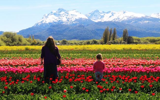 Campo de Tulipanes Esquel